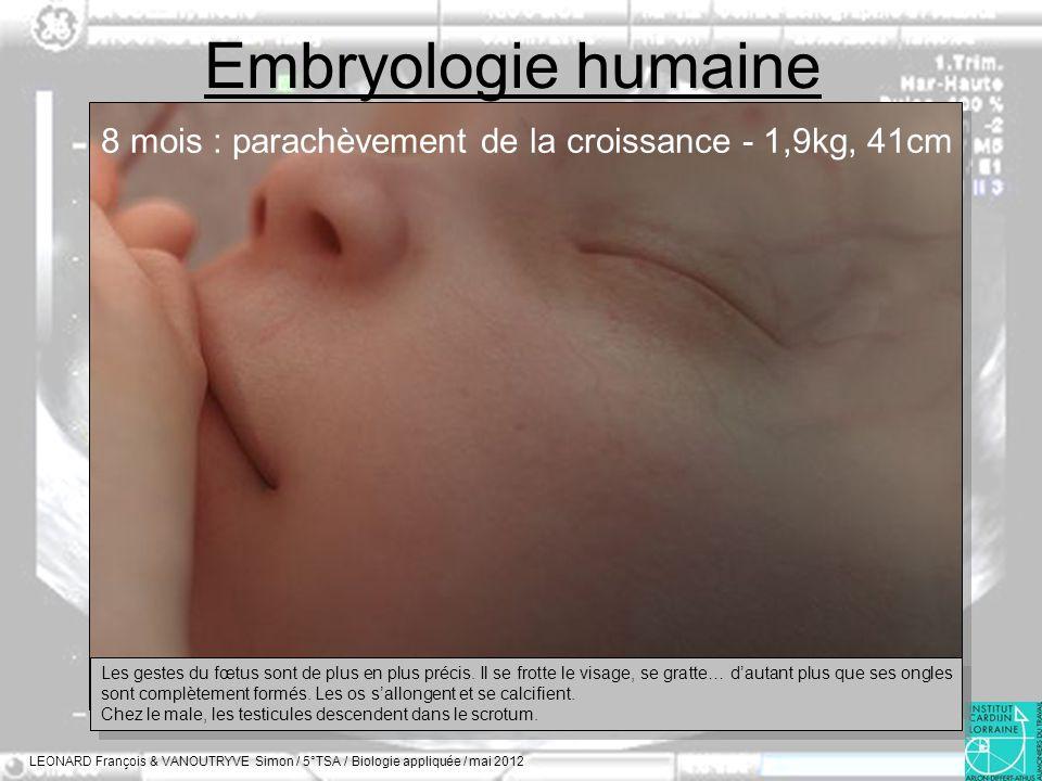 Embryologie humaine LEONARD François & VANOUTRYVE Simon / 5°TSA / Biologie appliquée / mai 2012 8 mois : parachèvement de la croissance - 1,9kg, 41cm