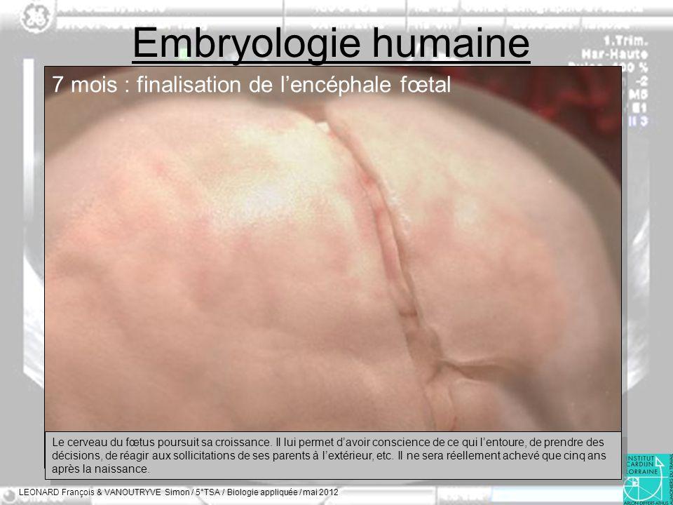Embryologie humaine LEONARD François & VANOUTRYVE Simon / 5°TSA / Biologie appliquée / mai 2012 7 mois : finalisation de lencéphale fœtal Le cerveau d