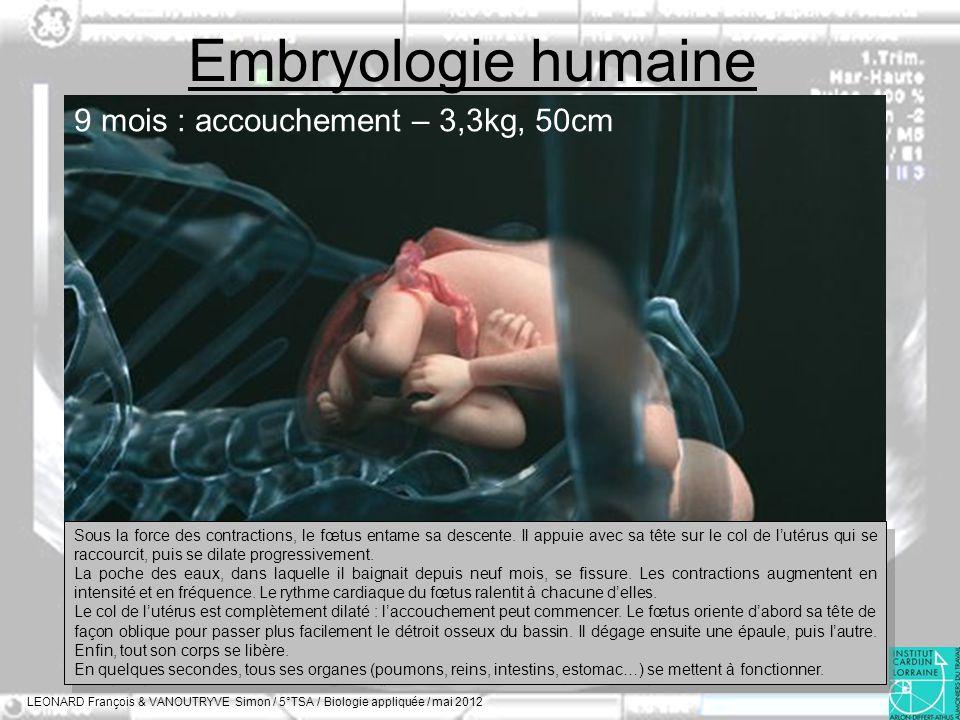 Embryologie humaine LEONARD François & VANOUTRYVE Simon / 5°TSA / Biologie appliquée / mai 2012 9 mois : accouchement – 3,3kg, 50cm Sous la force des