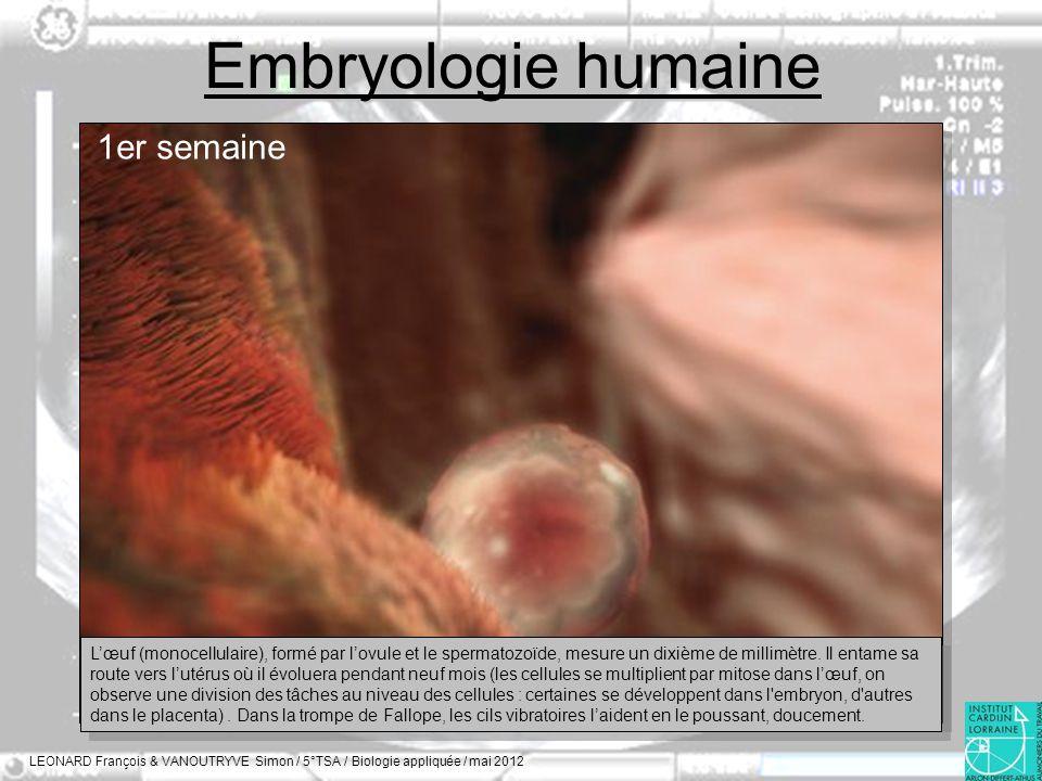 Embryologie humaine LEONARD François & VANOUTRYVE Simon / 5°TSA / Biologie appliquée / mai 2012 1er semaine Lœuf (monocellulaire), formé par lovule et