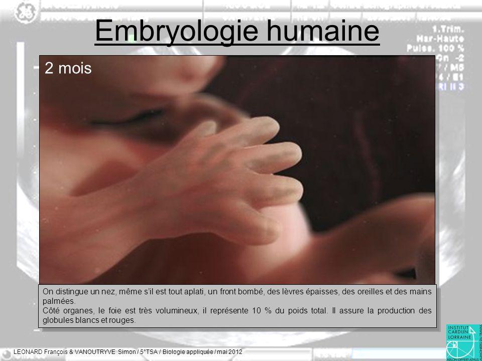 Embryologie humaine LEONARD François & VANOUTRYVE Simon / 5°TSA / Biologie appliquée / mai 2012 2 mois On distingue un nez, même sil est tout aplati,