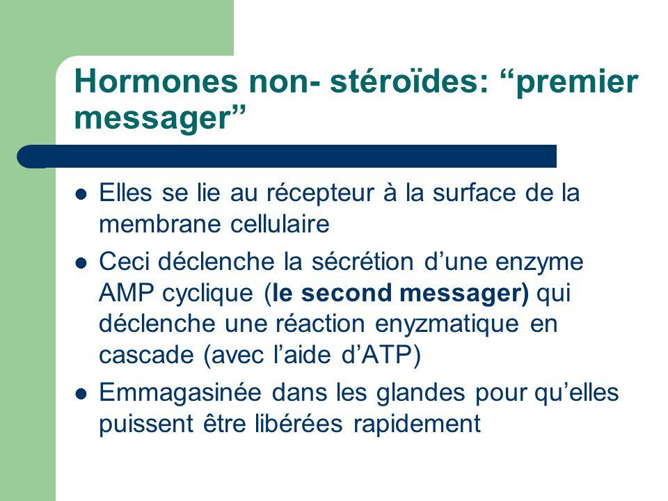 Hormones non- stéroïdes: premier messager Elles se lie au récepteur à la surface de la membrane cellulaire Ceci déclenche la sécrétion dune enzyme AMP