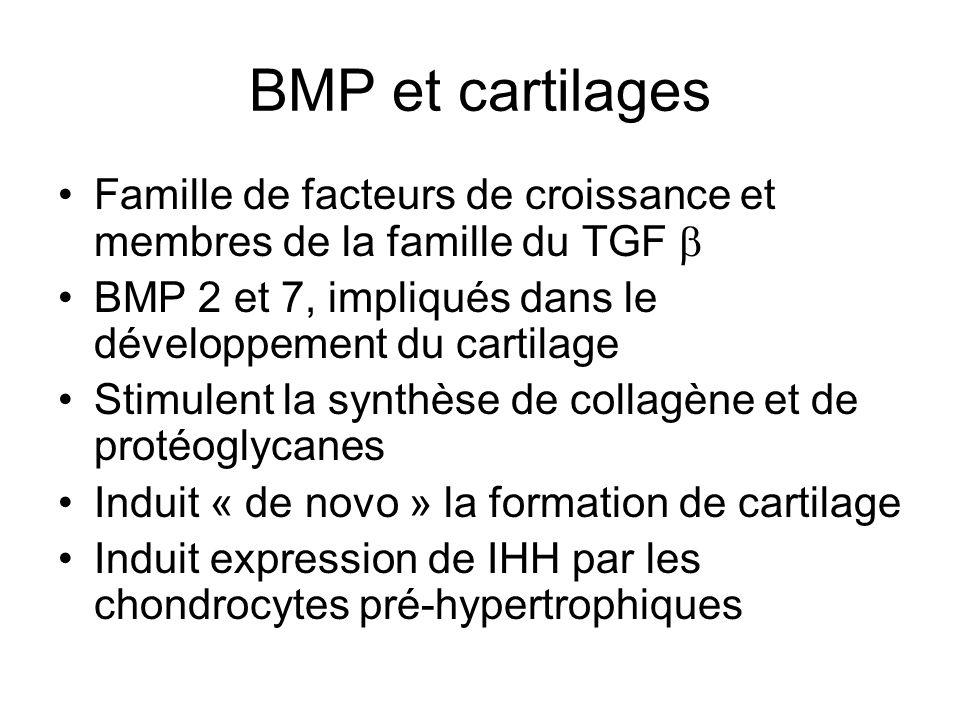BMP et cartilages Famille de facteurs de croissance et membres de la famille du TGF BMP 2 et 7, impliqués dans le développement du cartilage Stimulent