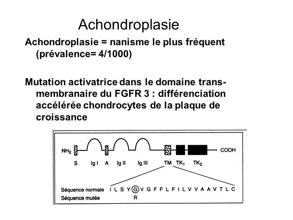 Achondroplasie = nanisme le plus fréquent (prévalence= 4/1000) Mutation activatrice dans le domaine trans- membranaire du FGFR 3 : différenciation acc