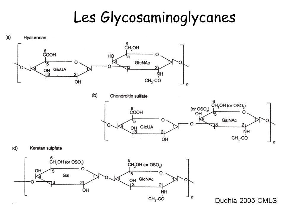Les Glycosaminoglycanes Dudhia 2005 CMLS