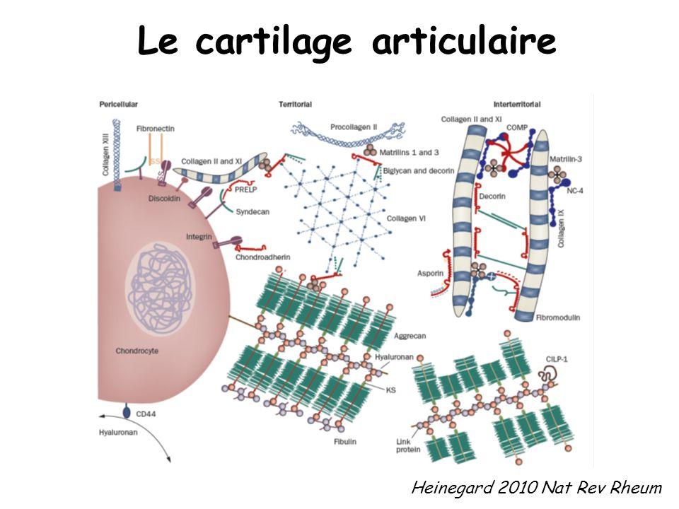 Heinegard 2010 Nat Rev Rheum Le cartilage articulaire