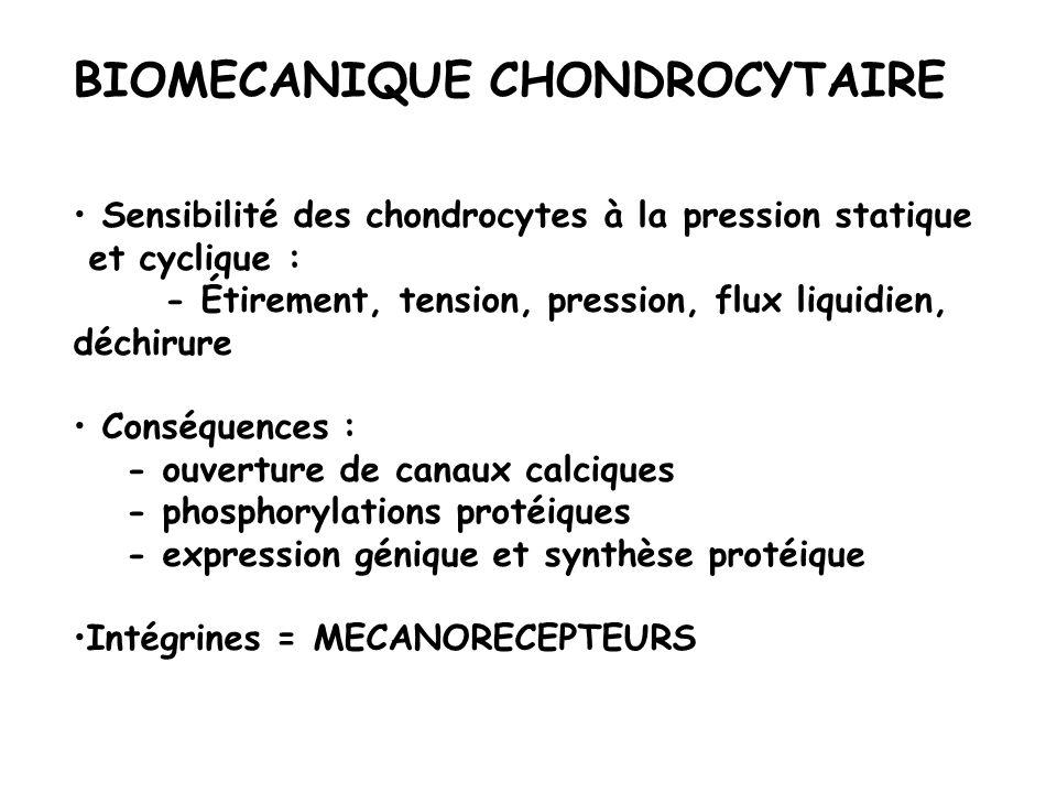 BIOMECANIQUE CHONDROCYTAIRE Sensibilité des chondrocytes à la pression statique et cyclique : - Étirement, tension, pression, flux liquidien, déchirur
