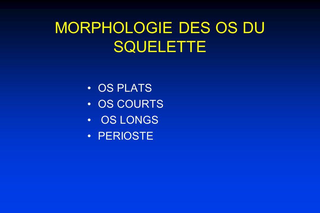 MORPHOLOGIE DES OS DU SQUELETTE OS PLATS OS COURTS OS LONGS PERIOSTE