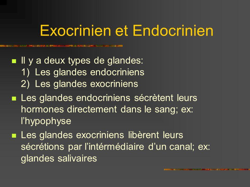 Exocrinien et Endocrinien Il y a deux types de glandes: 1) Les glandes endocriniens 2) Les glandes exocriniens Les glandes endocriniens sécrètent leur