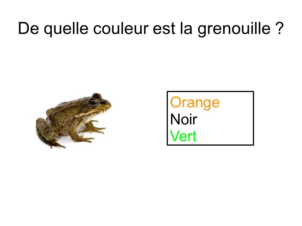 De quelle couleur est la grenouille ? Orange Noir Vert