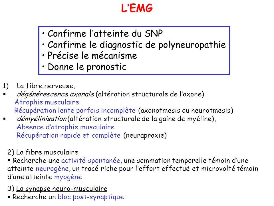 1)La fibre nerveuse, dégénérescence axonale (altération structurale de laxone) Atrophie musculaire Récupération lente parfois incomplète (axonotmesis