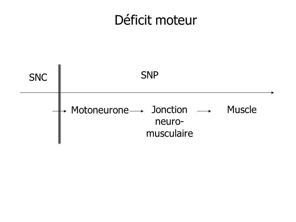 SNC SNP Motoneurone Jonction neuro- musculaire Muscle Déficit moteur