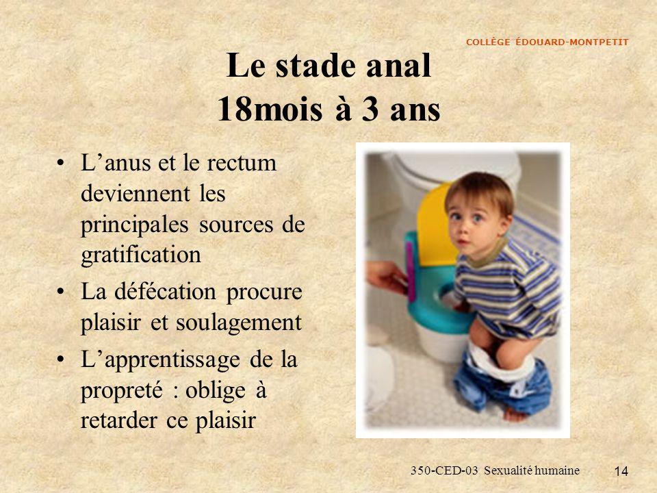 COLLÈGE ÉDOUARD-MONTPETIT 350-CED-03 Sexualité humaine 14 Le stade anal 18mois à 3 ans Lanus et le rectum deviennent les principales sources de gratif