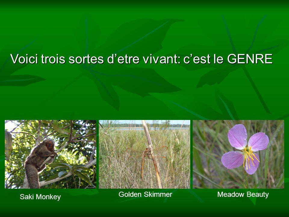 Voici trois sortes detre vivant: cest le GENRE Saki Monkey Golden SkimmerMeadow Beauty