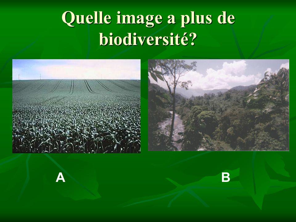 Quelle image a plus de biodiversité? AB