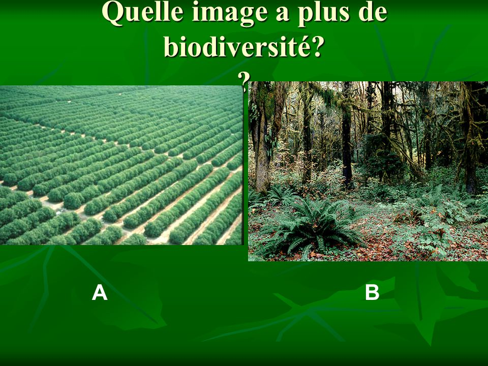 Quelle image a plus de biodiversité? ? AB