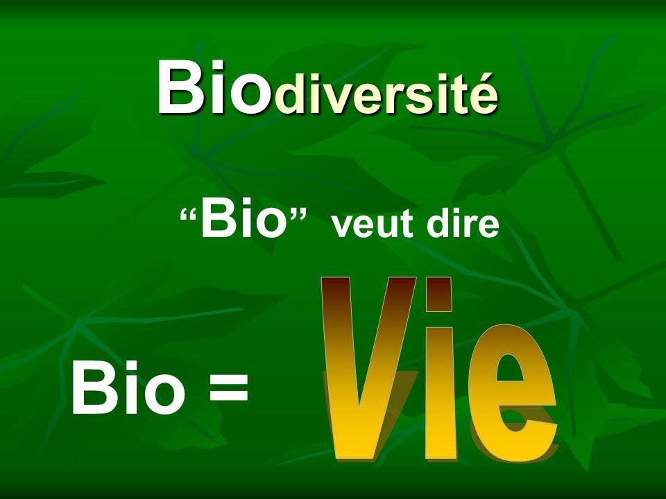 Bio diversité Diversité = Varieté Que veut dire diversité?