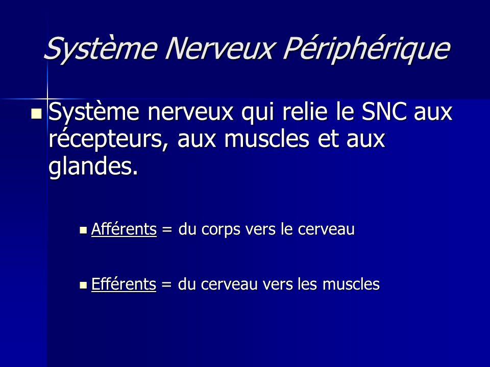 Système Nerveux Périphérique Système nerveux qui relie le SNC aux récepteurs, aux muscles et aux glandes. Système nerveux qui relie le SNC aux récepte