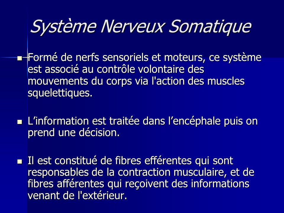 Système Nerveux Somatique Système Nerveux Somatique Formé de nerfs sensoriels et moteurs, ce système est associé au contrôle volontaire des mouvements
