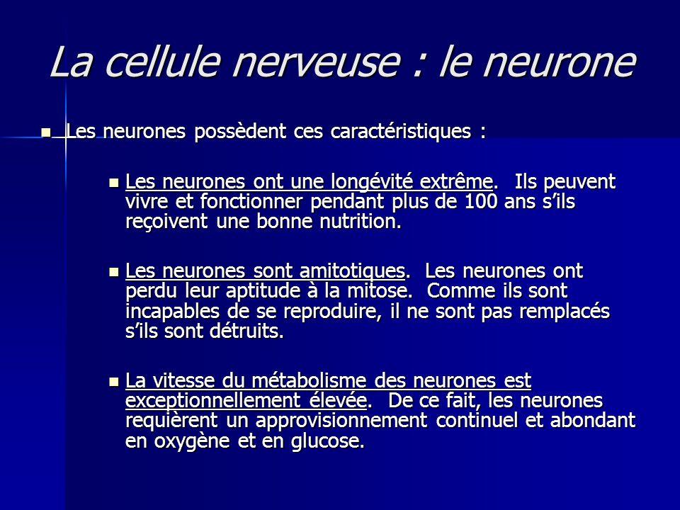 La cellule nerveuse : le neurone Les neurones possèdent ces caractéristiques : Les neurones possèdent ces caractéristiques : Les neurones ont une long