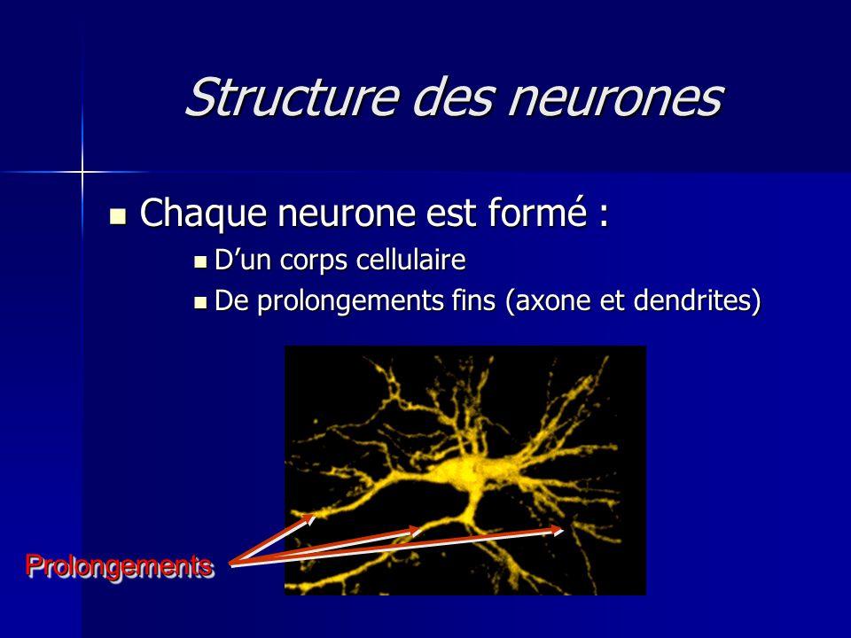 Structure des neurones Chaque neurone est formé : Chaque neurone est formé : Dun corps cellulaire Dun corps cellulaire De prolongements fins (axone et