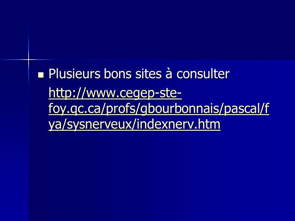 Plusieurs bons sites à consulter Plusieurs bons sites à consulter http://www.cegep-ste- foy.qc.ca/profs/gbourbonnais/pascal/f ya/sysnerveux/indexnerv.
