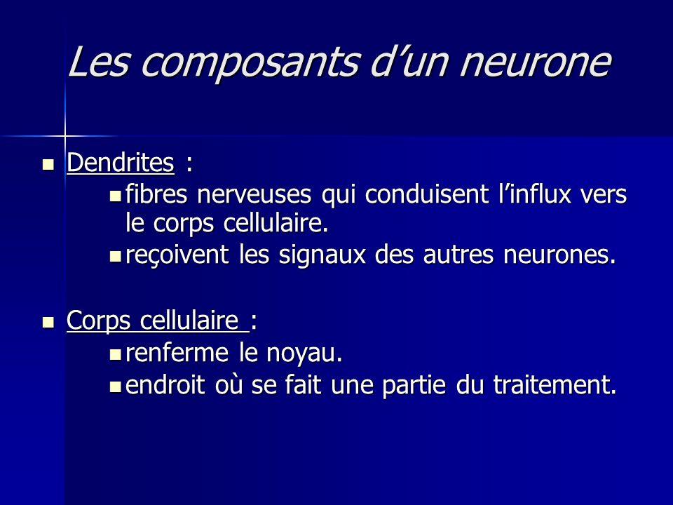 Les composants dun neurone Dendrites : Dendrites : fibres nerveuses qui conduisent linflux vers le corps cellulaire. fibres nerveuses qui conduisent l