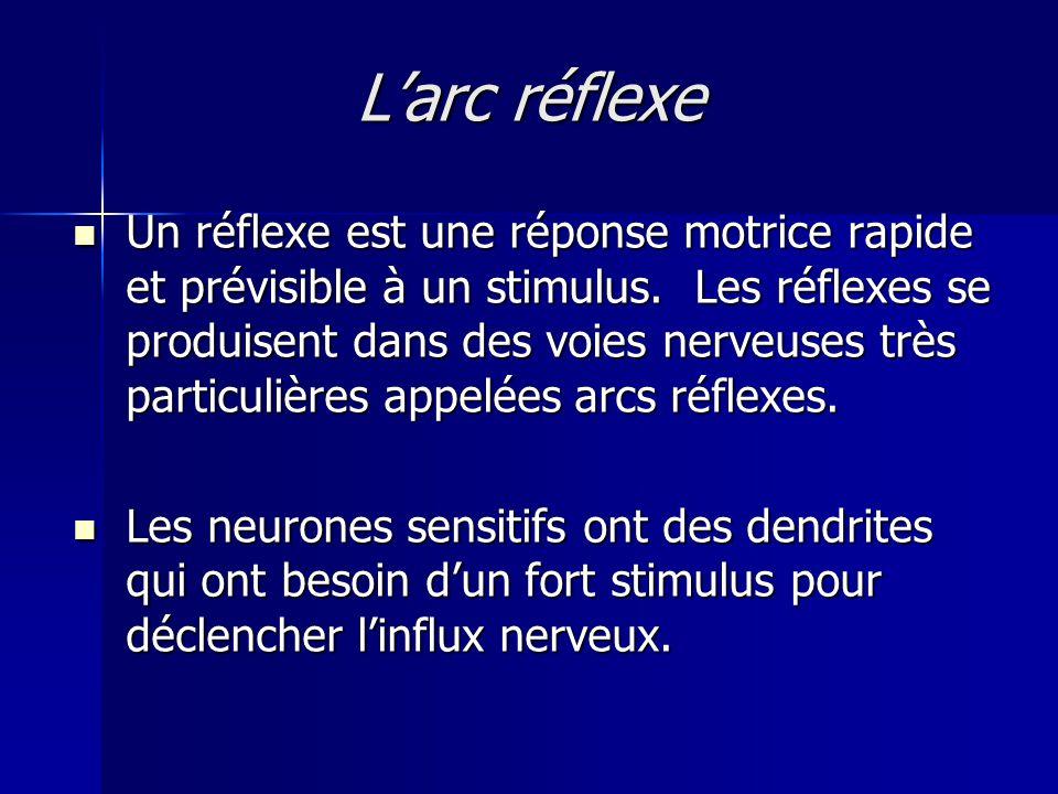 Larc réflexe Un réflexe est une réponse motrice rapide et prévisible à un stimulus. Les réflexes se produisent dans des voies nerveuses très particuli