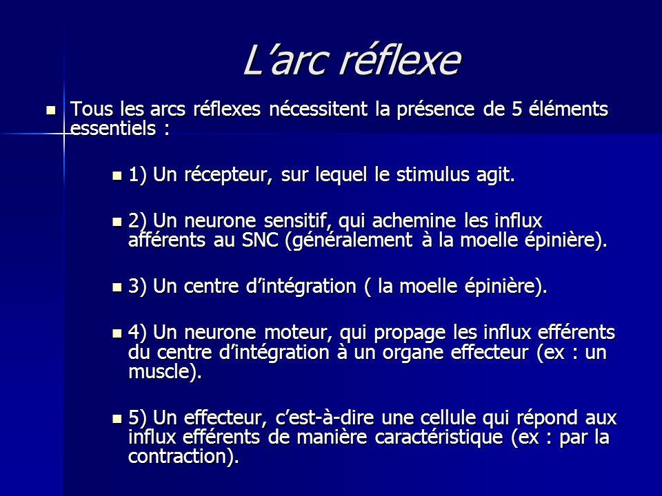 Larc réflexe Tous les arcs réflexes nécessitent la présence de 5 éléments essentiels : Tous les arcs réflexes nécessitent la présence de 5 éléments es