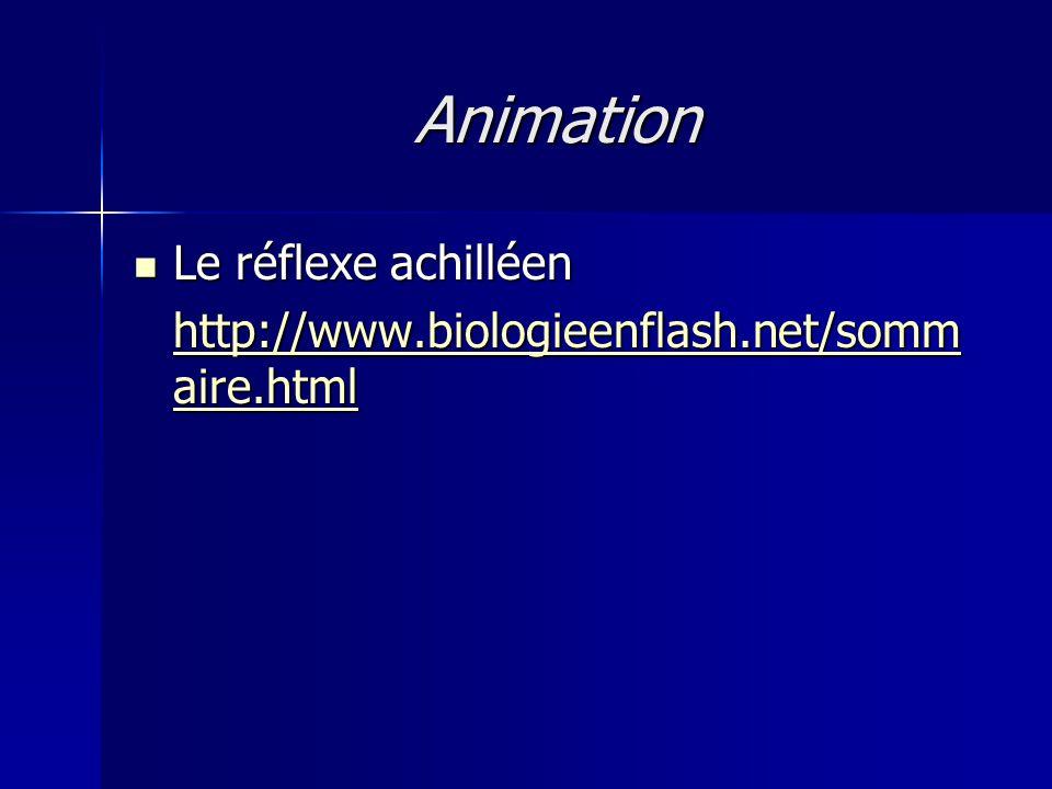 Animation Le réflexe achilléen Le réflexe achilléen http://www.biologieenflash.net/somm aire.html http://www.biologieenflash.net/somm aire.html