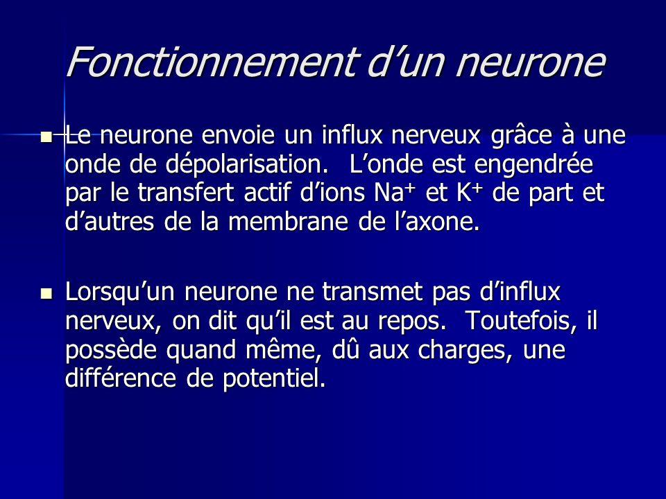 Fonctionnement dun neurone Le neurone envoie un influx nerveux grâce à une onde de dépolarisation. Londe est engendrée par le transfert actif dions Na