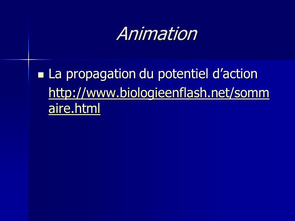 Animation La propagation du potentiel daction La propagation du potentiel daction http://www.biologieenflash.net/somm aire.html http://www.biologieenf