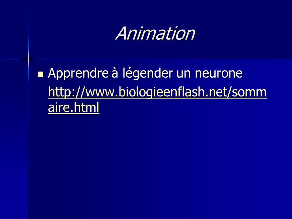 Animation Apprendre à légender un neurone Apprendre à légender un neurone http://www.biologieenflash.net/somm aire.html http://www.biologieenflash.net