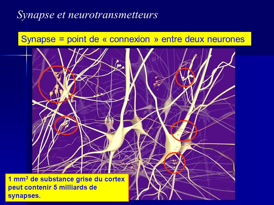 Synapse = point de « connexion » entre deux neurones 1 mm 3 de substance grise du cortex peut contenir 5 milliards de synapses. Synapse et neurotransm