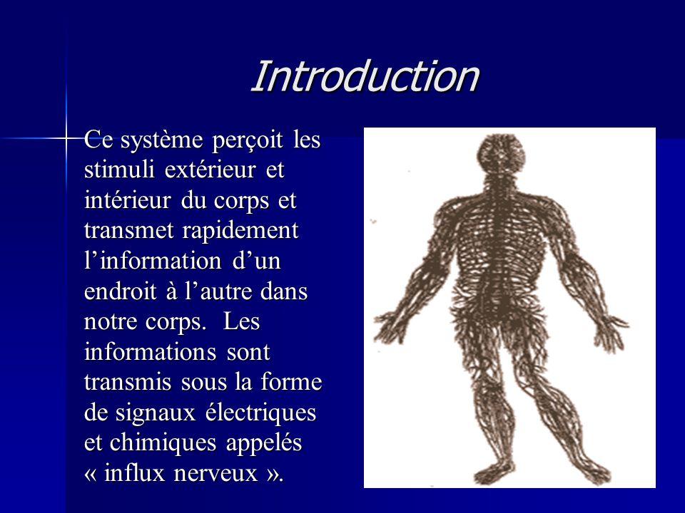 Introduction Ce système perçoit les stimuli extérieur et intérieur du corps et transmet rapidement linformation dun endroit à lautre dans notre corps.