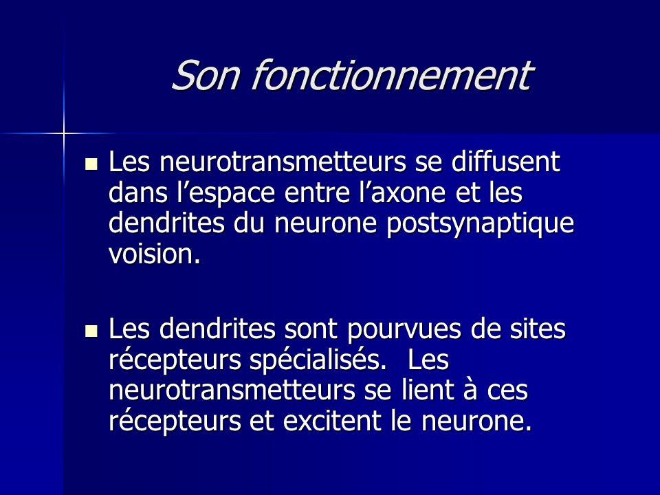 Son fonctionnement Les neurotransmetteurs se diffusent dans lespace entre laxone et les dendrites du neurone postsynaptique voision. Les neurotransmet
