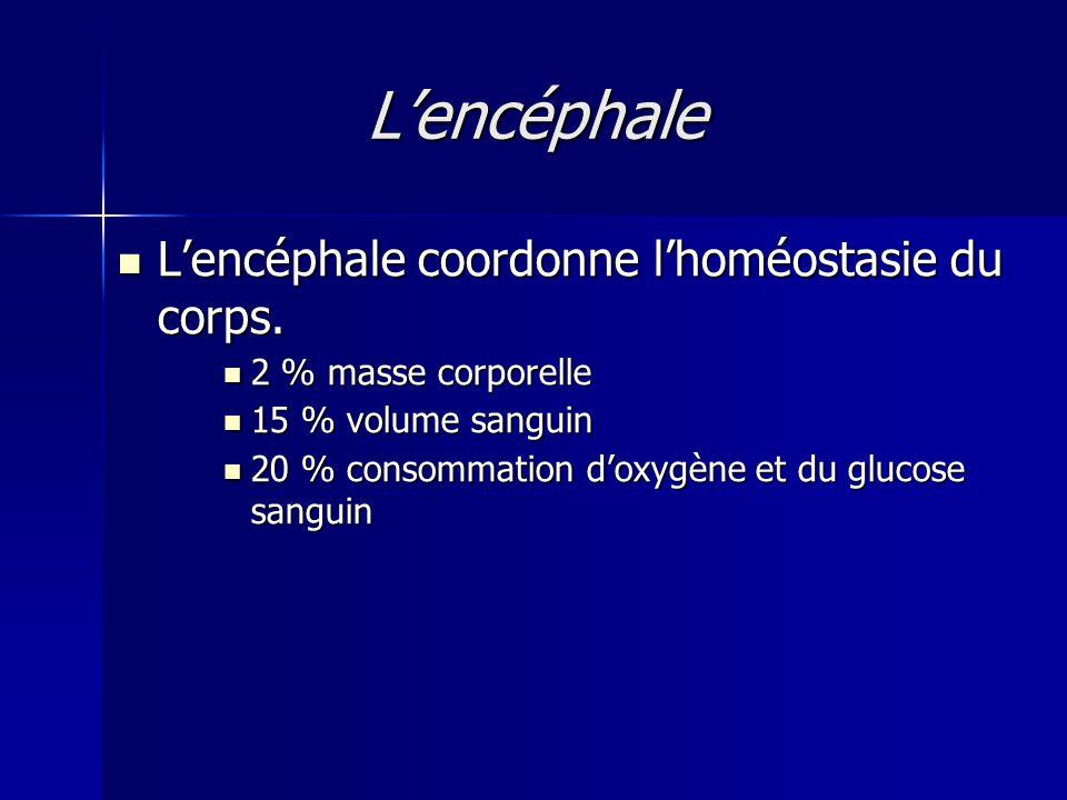 Lencéphale Lencéphale coordonne lhoméostasie du corps. Lencéphale coordonne lhoméostasie du corps. 2 % masse corporelle 2 % masse corporelle 15 % volu