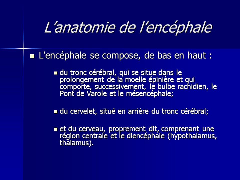 Lanatomie de lencéphale L'encéphale se compose, de bas en haut : L'encéphale se compose, de bas en haut : du tronc cérébral, qui se situe dans le prol