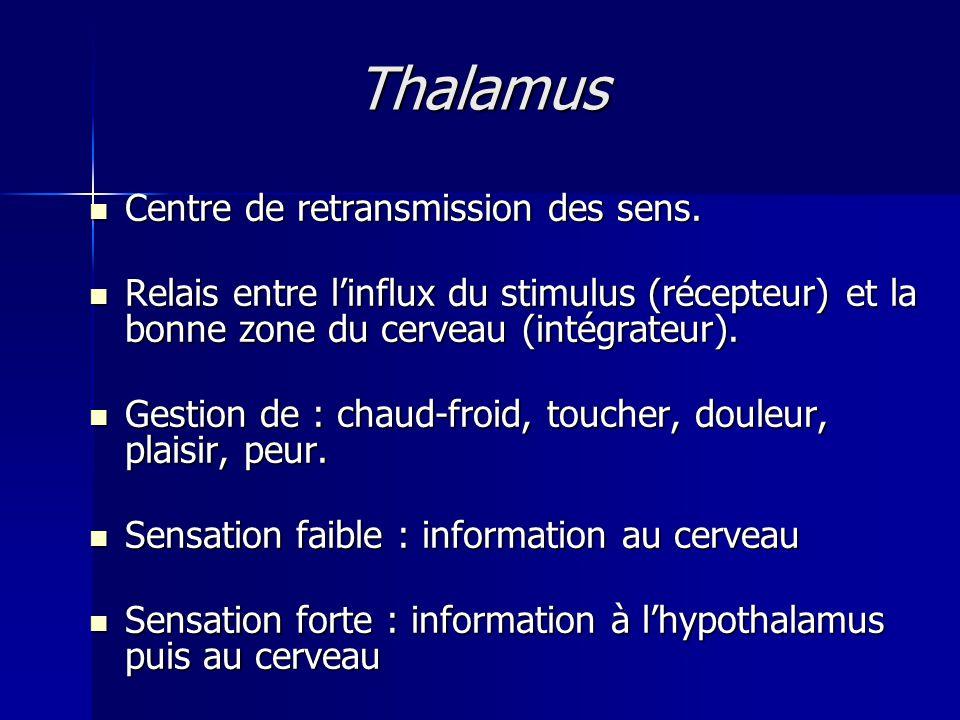 Thalamus Centre de retransmission des sens. Centre de retransmission des sens. Relais entre linflux du stimulus (récepteur) et la bonne zone du cervea