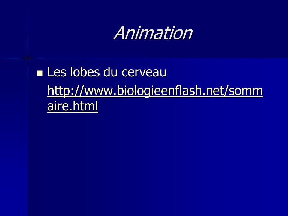 Animation Les lobes du cerveau Les lobes du cerveau http://www.biologieenflash.net/somm aire.html http://www.biologieenflash.net/somm aire.html
