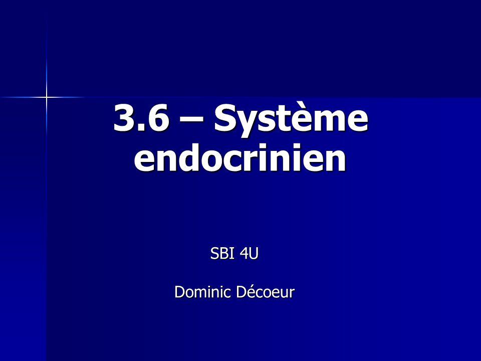 Introduction Système régulateur et coordinateur de notre organisme formé de glandes endocriniennes réparties dans lorganisme.