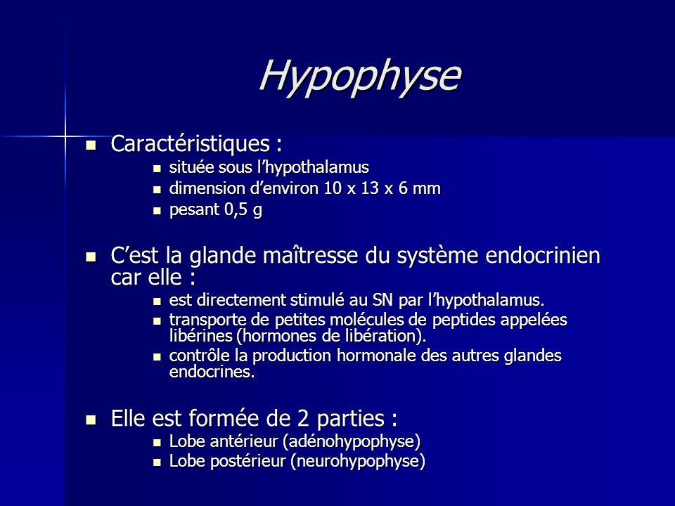Hypophyse Caractéristiques : Caractéristiques : située sous lhypothalamus située sous lhypothalamus dimension denviron 10 x 13 x 6 mm dimension denvir