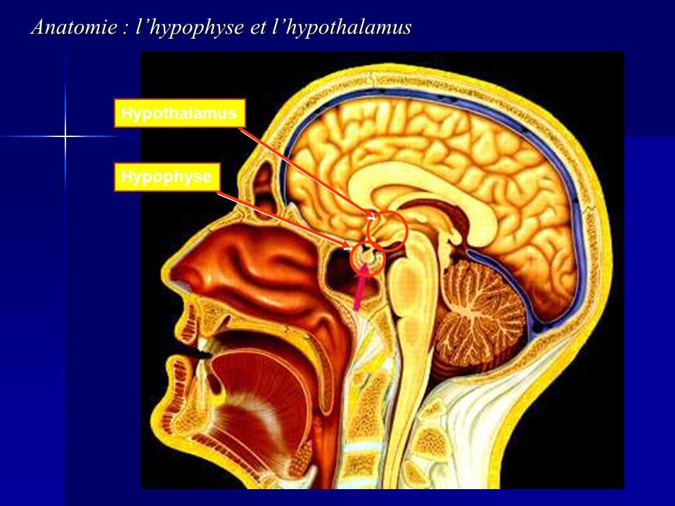 HypothalamusHypophyse Anatomie : lhypophyse et lhypothalamus