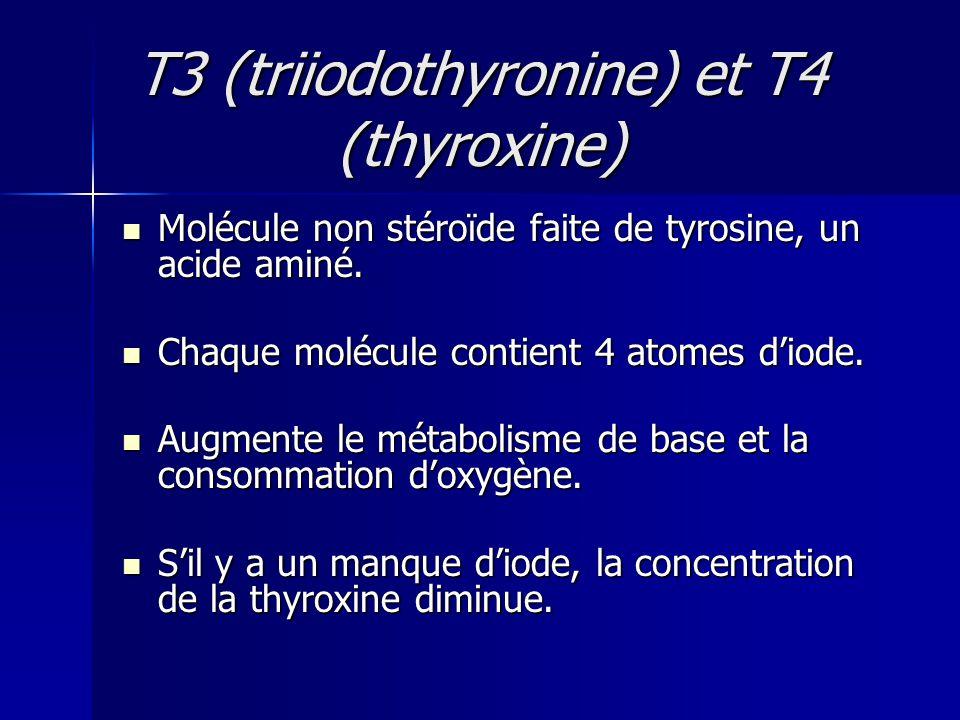 T3 (triiodothyronine) et T4 (thyroxine) Molécule non stéroïde faite de tyrosine, un acide aminé. Molécule non stéroïde faite de tyrosine, un acide ami