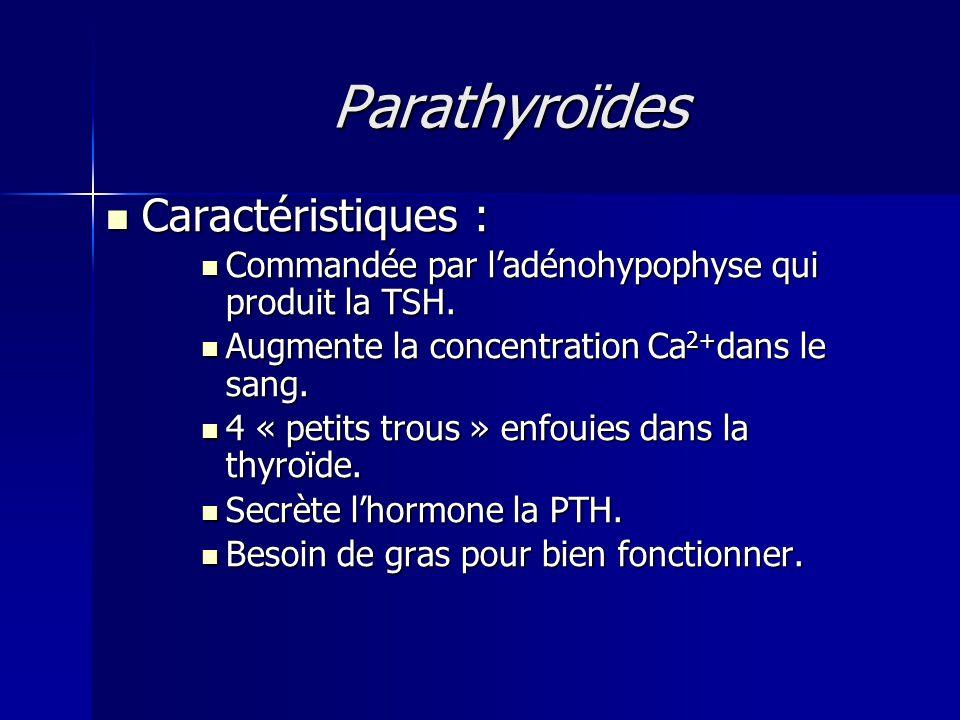 Parathyroïdes Caractéristiques : Caractéristiques : Commandée par ladénohypophyse qui produit la TSH. Commandée par ladénohypophyse qui produit la TSH