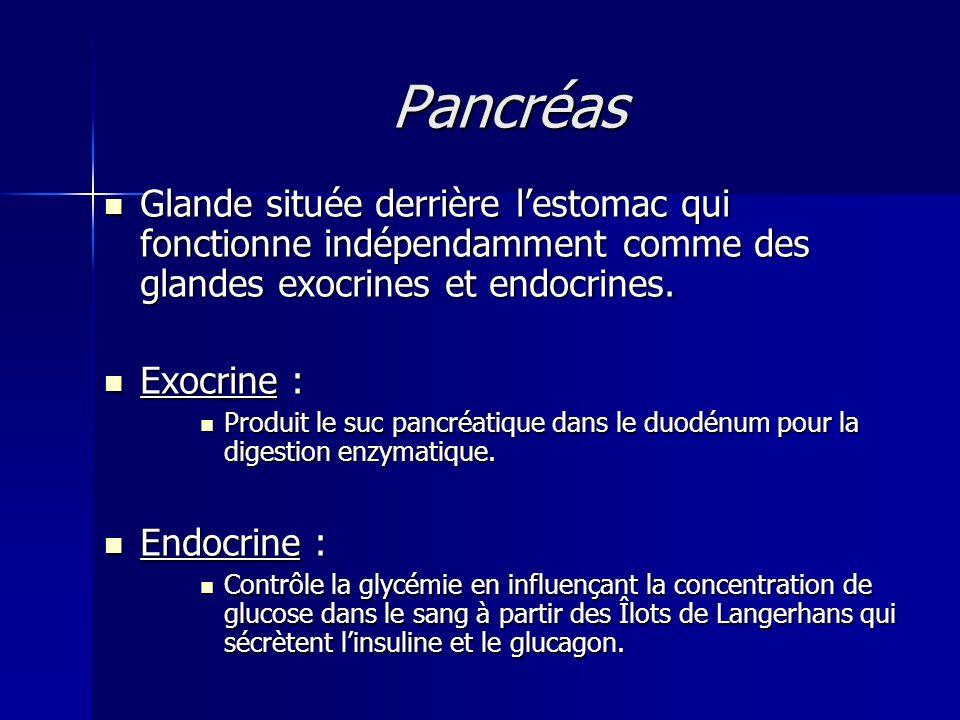 Pancréas Glande située derrière lestomac qui fonctionne indépendamment comme des glandes exocrines et endocrines. Glande située derrière lestomac qui