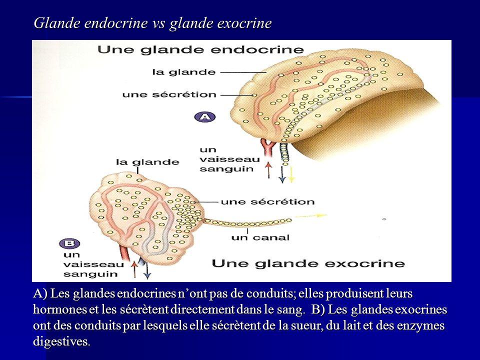 Glande endocrine vs glande exocrine A) Les glandes endocrines nont pas de conduits; elles produisent leurs hormones et les sécrètent directement dans