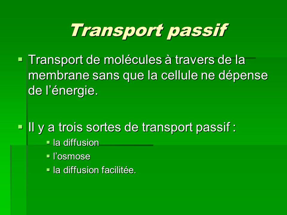 Transport passif Transport de molécules à travers de la membrane sans que la cellule ne dépense de lénergie. Transport de molécules à travers de la me