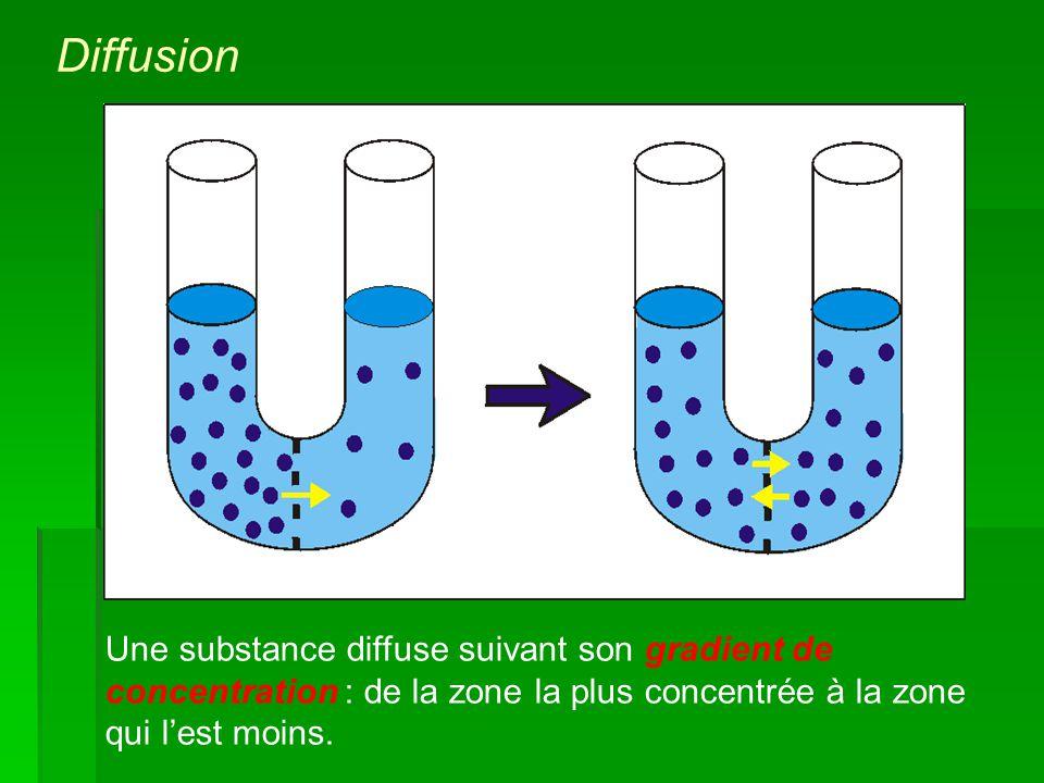 Une substance diffuse suivant son gradient de concentration : de la zone la plus concentrée à la zone qui lest moins. Diffusion