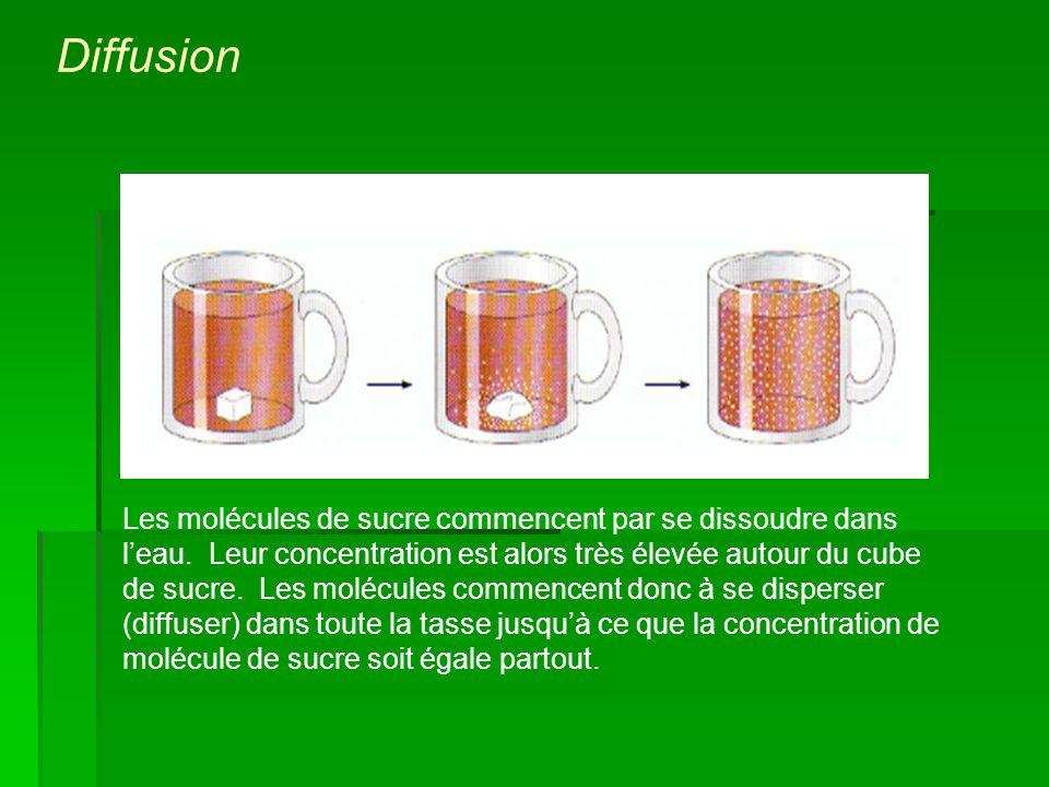 Les molécules de sucre commencent par se dissoudre dans leau. Leur concentration est alors très élevée autour du cube de sucre. Les molécules commence
